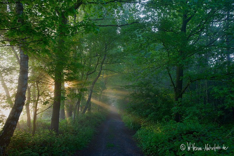 Weg im Sonnenaufgang